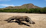 Komodo Island Tour 3 Days 2 Nights